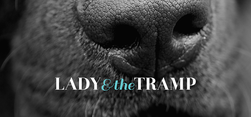 Lady & the Tramp business branding